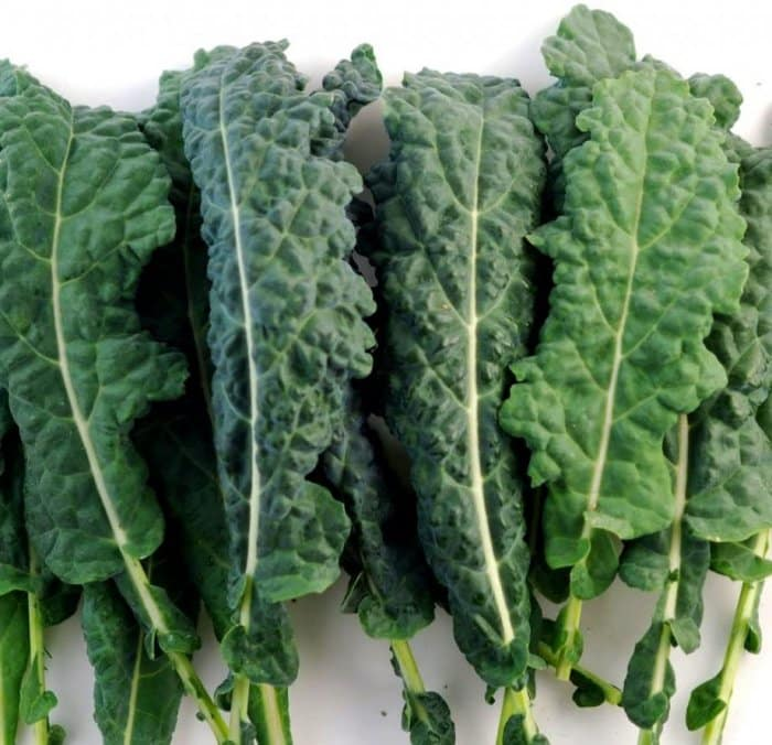 Kale Italian Lacinato Nero Toscana Seeds by PowerGrow Systems