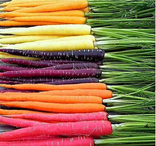 Big Pack - (3,500+) Rainbow Mix Carrot Seeds