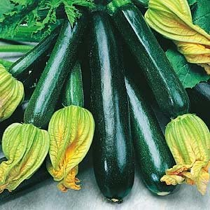 Black Beauty Zucchini Seeds by PowerGrow Systems