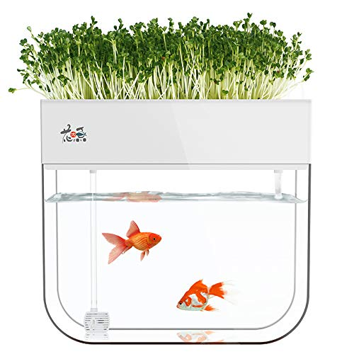 Huamuyu aquaponics kit