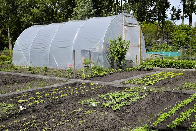 ECOgardener Greenhouse Clear Plastic Film