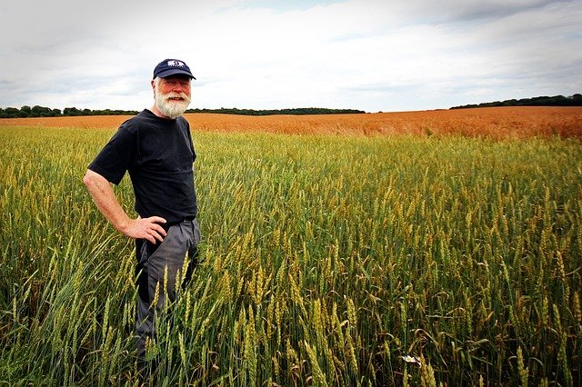 a farmer on a wheat field
